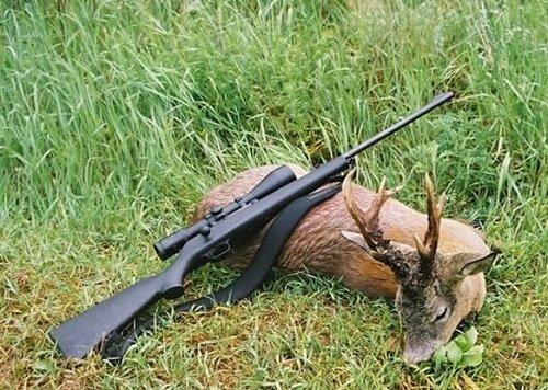 Незаконная охота на сибирских косуль